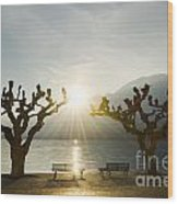 Benches And Trees On The Lakefront Wood Print