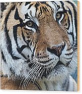 Bengal Wood Print by Elizabeth Hart