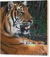 Bengal Tiger - Teeth Wood Print