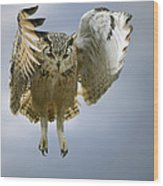 Bengalese Eagle Owl In Flight Wood Print