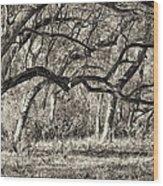 Bent Trees Sepia Toned Wood Print