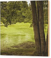 Bent Twig 5 Wood Print