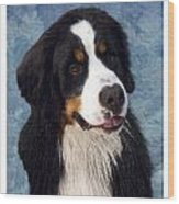 Bernese Mountain Dog 11 Wood Print