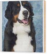 Bernese Mountain Dog 194 Wood Print