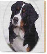 Bernese Mountain Dog 443 Wood Print