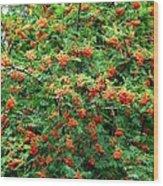 Berries In Profusion Wood Print