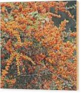Berry Orange Wood Print