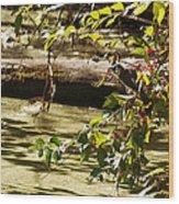 Berry Picker Wood Print