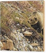 Berry Sniffer Wood Print