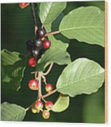 Berry Stages Wood Print