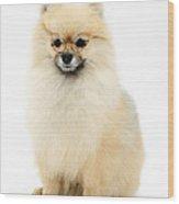 Bespectled Pomeranian Wood Print