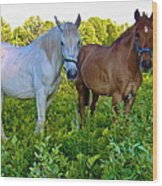 Best Buds Out To Pasture Wood Print