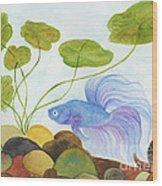 Blue Betta 1 Wood Print