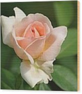 Betty White Rose Wood Print