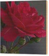 Betty's Red Rose II  Wood Print