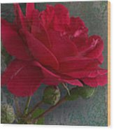 Betty's Red Rose II With Decorations Wood Print