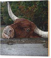 Beware Smiling Bull Wood Print