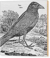 Bewick: Raven Wood Print