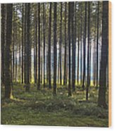 Beyond The Woods Wood Print