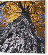 Big Autumn Tree In Fall Park Wood Print