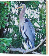 Big Bird - Great Blue Heron Wood Print