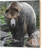 Big Brown Bear Wood Print