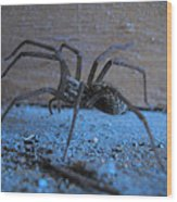 Big Brown Spider Wood Print