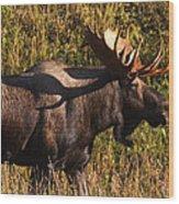 Big Bull Wood Print