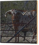 Big Bull Long Horn Wood Print