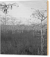Big Cypress Winter Wood Print