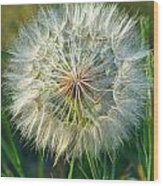 Big Dandelion Seed Wood Print