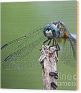 Big Eyes Blue Dragonfly Wood Print