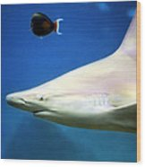 Big Fish Little Fish Wood Print