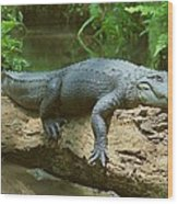 Big Gator On A Log Wood Print