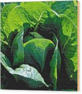 Big Green Cabbage Wood Print