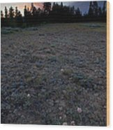 Big-headed Clover Sunset Wood Print