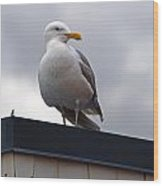 Big Seagull Wood Print