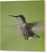Big Star Humming Bird Wood Print by Dean Bennett