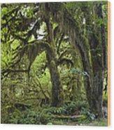 Bigleaf Maple Acer Macrophyllum Wood Print
