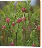 Bilberry Flowers Wood Print