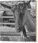 Billy The Ham Monochrome Wood Print