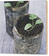 Biodegradable Newspaper Pots Wood Print