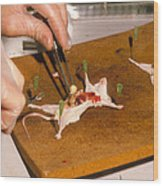 Biology Lesson: Gloved Hands Dissecting A Mouse Wood Print