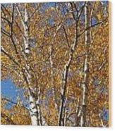 Birch Beauty Wood Print