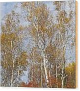 Birch Grove 4269 Wood Print