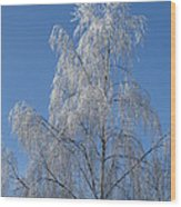 Birch In Frost. Wood Print
