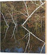 Birch Lake Reflections Wood Print