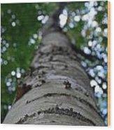 Birch Perspective Wood Print