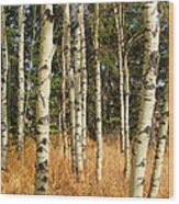 Birch Tree Abstract Wood Print