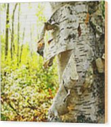 Birch Tree Wood Print